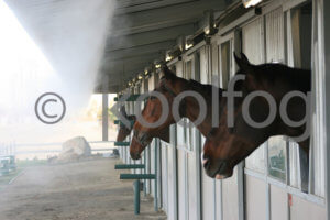 Equestrian Cooling Systems