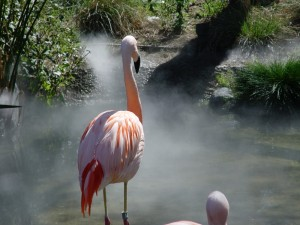 Animal Misting
