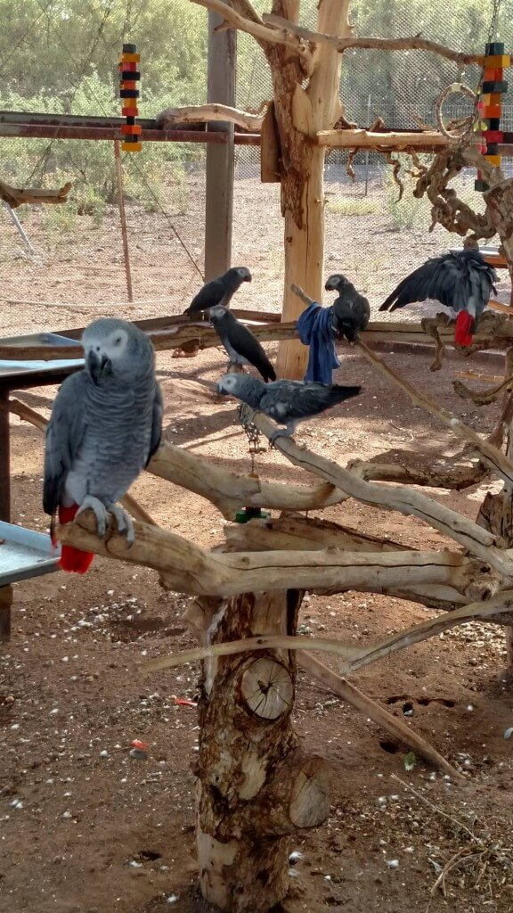 Oasis Sanctuary Cool Birds