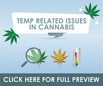 cannabis misting systems