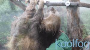zoo misting poles